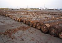 輸入木材・原木