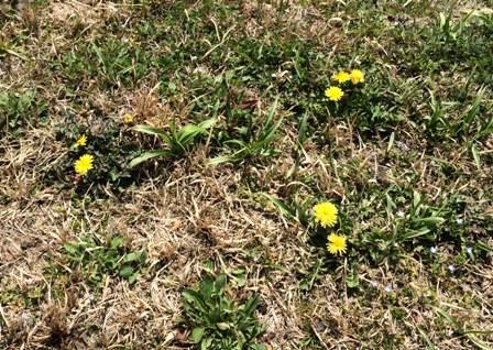 花見の季節2