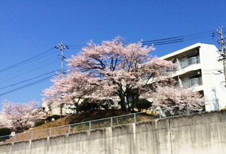 花見の季節1