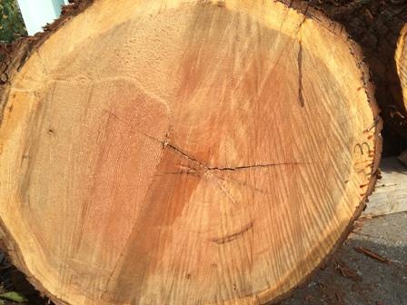 杉の建具材2